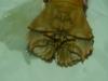 Moreton Bay Bug