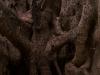 brisbane-botanical-garden03