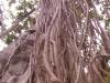 brisbane-botanical-garden04