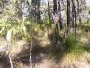 griffi-nature-walk002