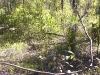 griffi-nature-walk003