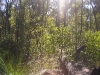 griffi-nature-walk004