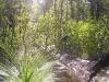 griffi-nature-walk005
