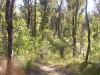 griffi-nature-walk006