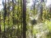 griffi-nature-walk010
