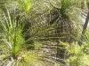 griffi-nature-walk011