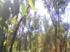 griffi-nature-walk014