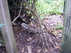 koala_sanctuary_brisbane001