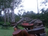 koala_sanctuary_brisbane002