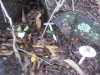 koala_sanctuary_brisbane026