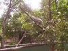 koala_sanctuary_brisbane029