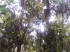 koala_sanctuary_brisbane030