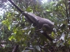koala_sanctuary_brisbane031