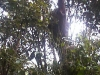 koala_sanctuary_brisbane038