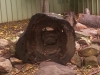 koala_sanctuary_brisbane039