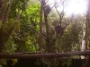koala_sanctuary_brisbane070