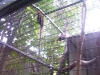 koala_sanctuary_brisbane074