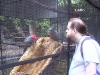koala_sanctuary_brisbane079