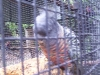 koala_sanctuary_brisbane082
