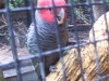 koala_sanctuary_brisbane084