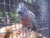 koala_sanctuary_brisbane085