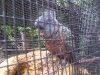 koala_sanctuary_brisbane086