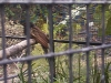 koala_sanctuary_brisbane094