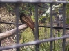 koala_sanctuary_brisbane095