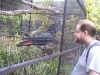 koala_sanctuary_brisbane098