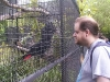 koala_sanctuary_brisbane100