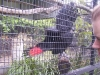 koala_sanctuary_brisbane102