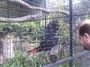 koala_sanctuary_brisbane103