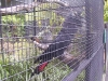 koala_sanctuary_brisbane104