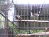 koala_sanctuary_brisbane106