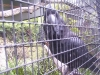 koala_sanctuary_brisbane107
