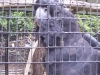 koala_sanctuary_brisbane108