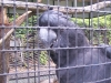 koala_sanctuary_brisbane115