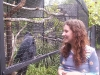 koala_sanctuary_brisbane117
