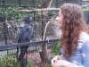 koala_sanctuary_brisbane118