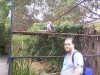 koala_sanctuary_brisbane120