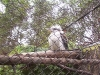 koala_sanctuary_brisbane121