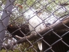 koala_sanctuary_brisbane122