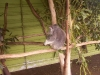 koala_sanctuary_brisbane125