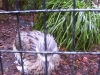 koala_sanctuary_brisbane135