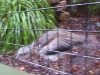 koala_sanctuary_brisbane137