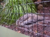 koala_sanctuary_brisbane138