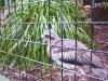 koala_sanctuary_brisbane139