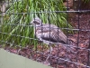 koala_sanctuary_brisbane140