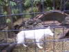 koala_sanctuary_brisbane141