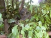 koala_sanctuary_brisbane147